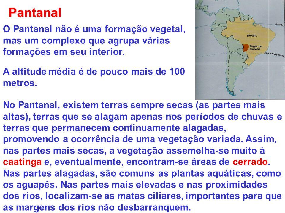 Pantanal O Pantanal não é uma formação vegetal, mas um complexo que agrupa várias formações em seu interior.