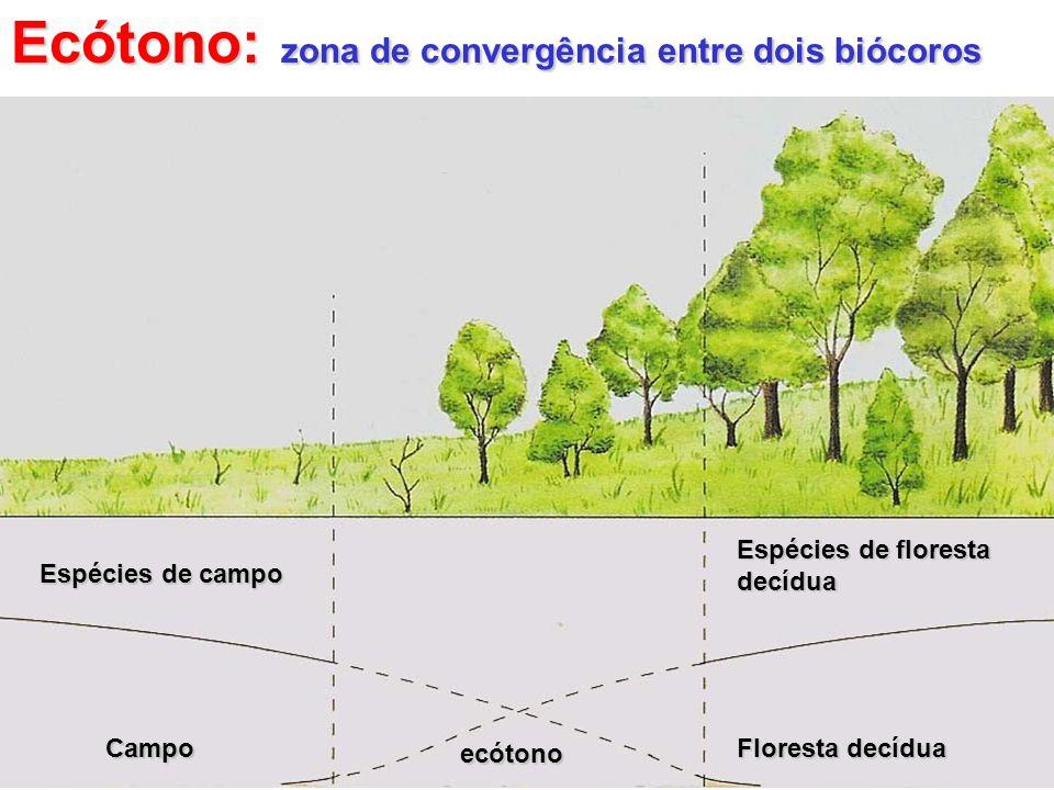 Ecótono: zona de convergência entre dois biócoros