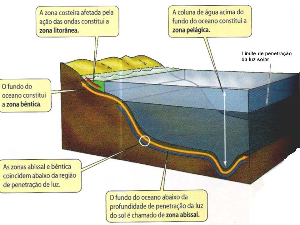 Limite de penetração da luz solar