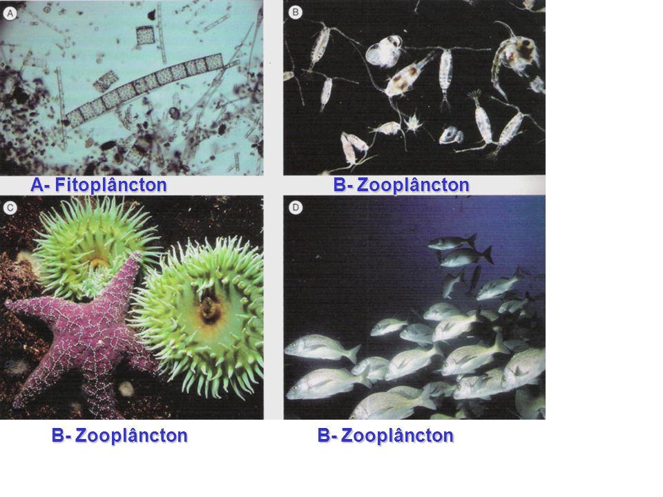A- Fitoplâncton B- Zooplâncton B- Zooplâncton B- Zooplâncton