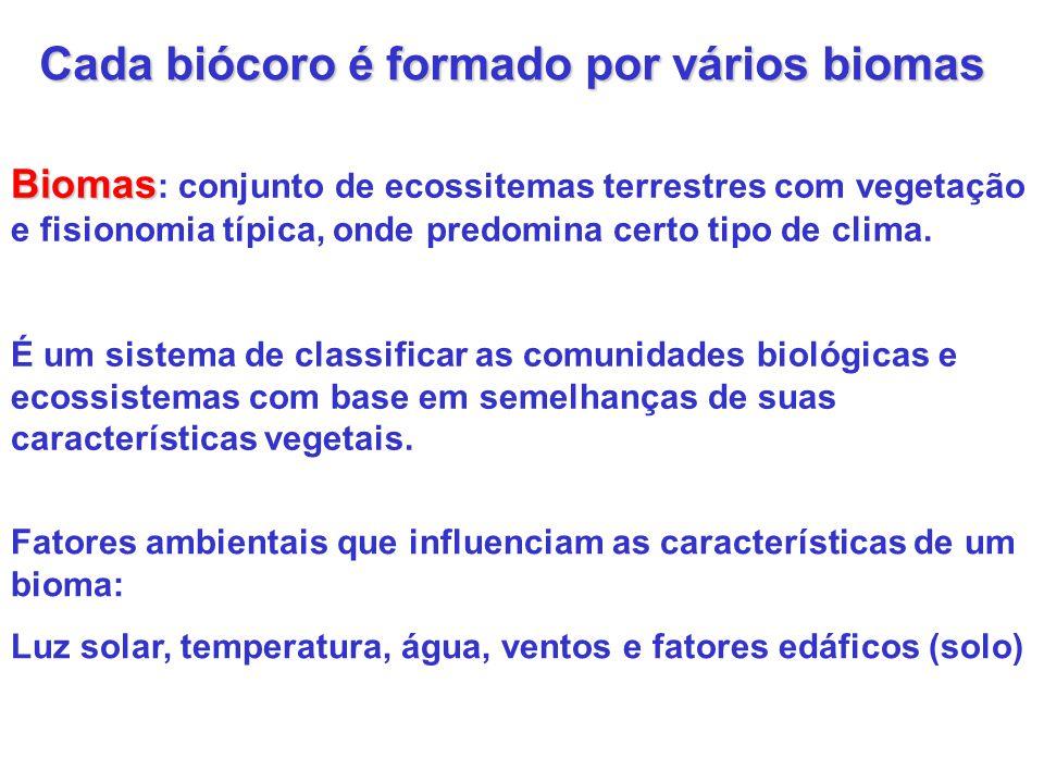 Cada biócoro é formado por vários biomas
