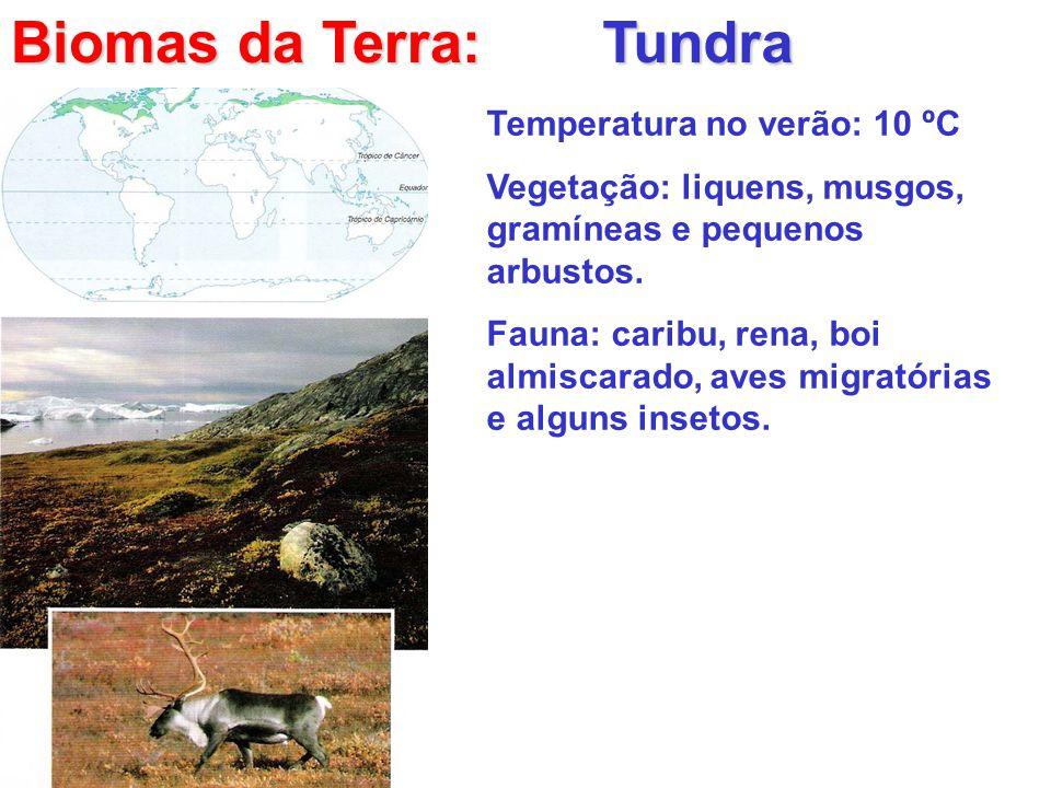 Biomas da Terra: Tundra Temperatura no verão: 10 ºC