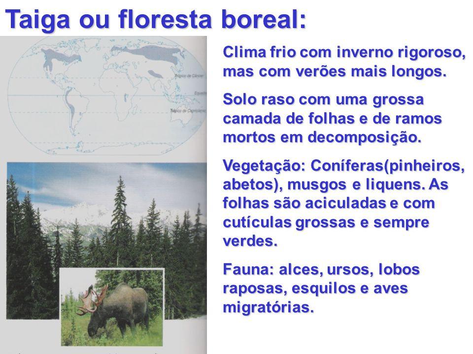 Taiga ou floresta boreal: