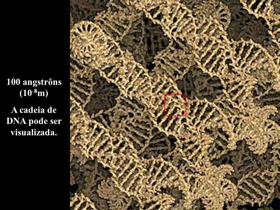 A cadeia de DNA pode ser visualizada.