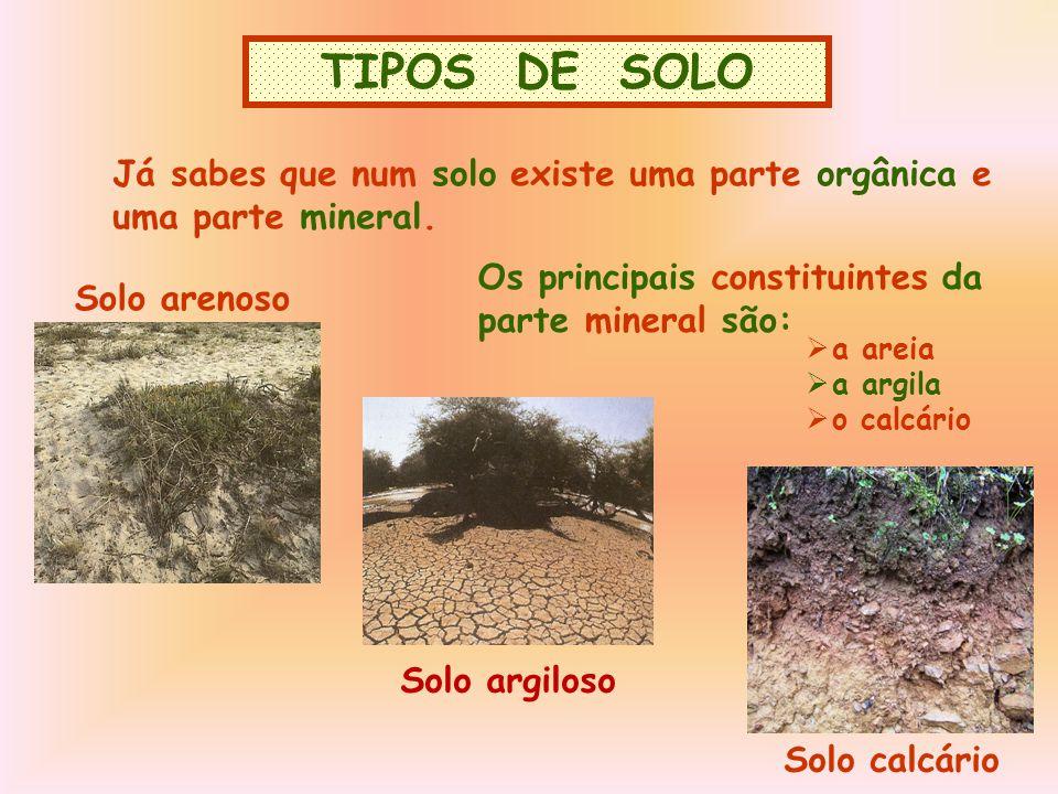 TIPOS DE SOLO TIPOS DE SOLO