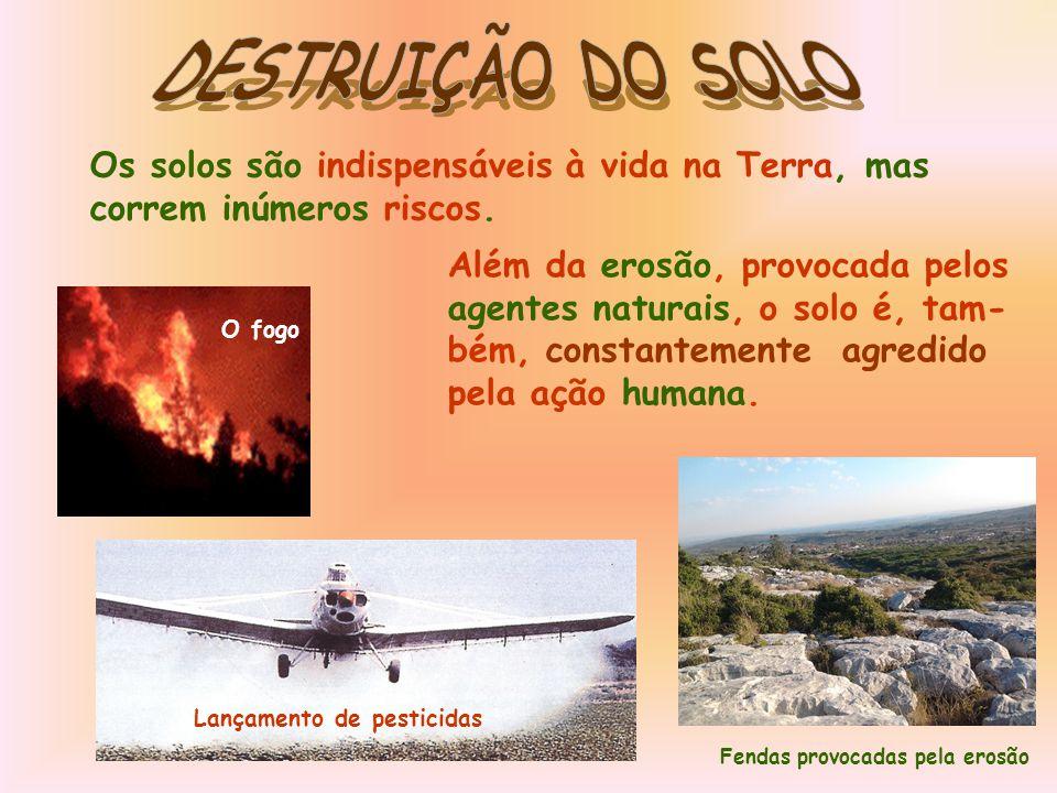 DESTRUIÇÃO DO SOLO Os solos são indispensáveis à vida na Terra, mas correm inúmeros riscos. Além da erosão, provocada pelos.
