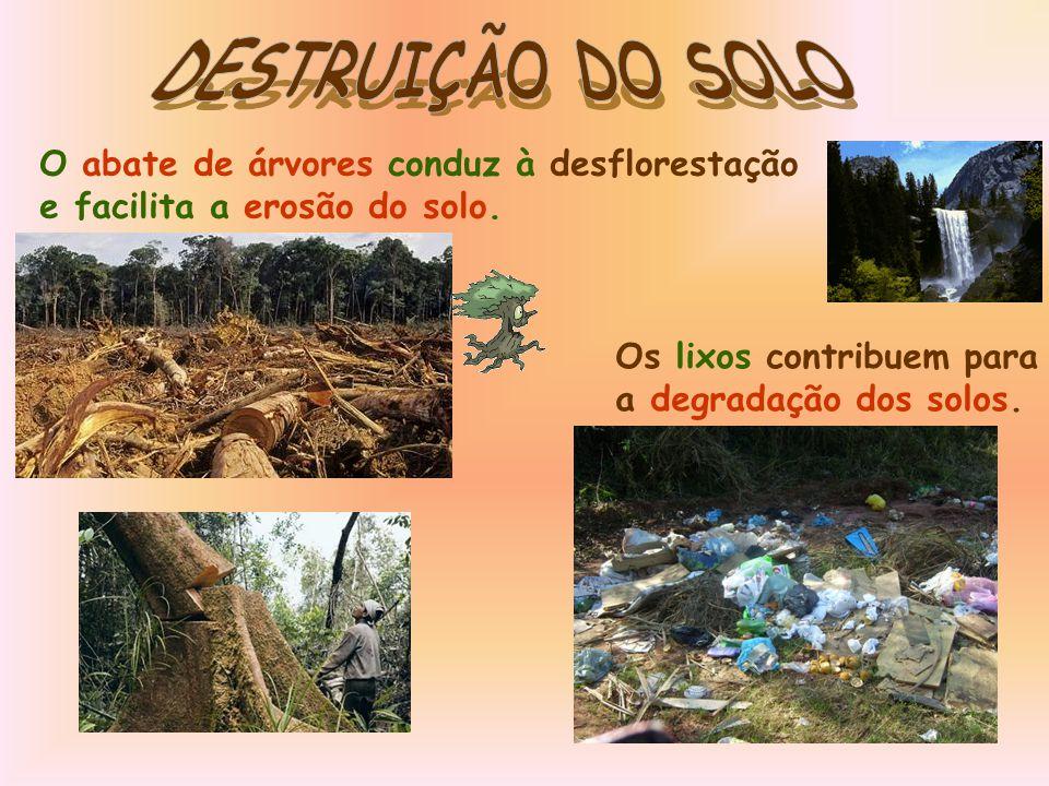 DESTRUIÇÃO DO SOLO O abate de árvores conduz à desflorestação e facilita a erosão do solo. Os lixos contribuem para.