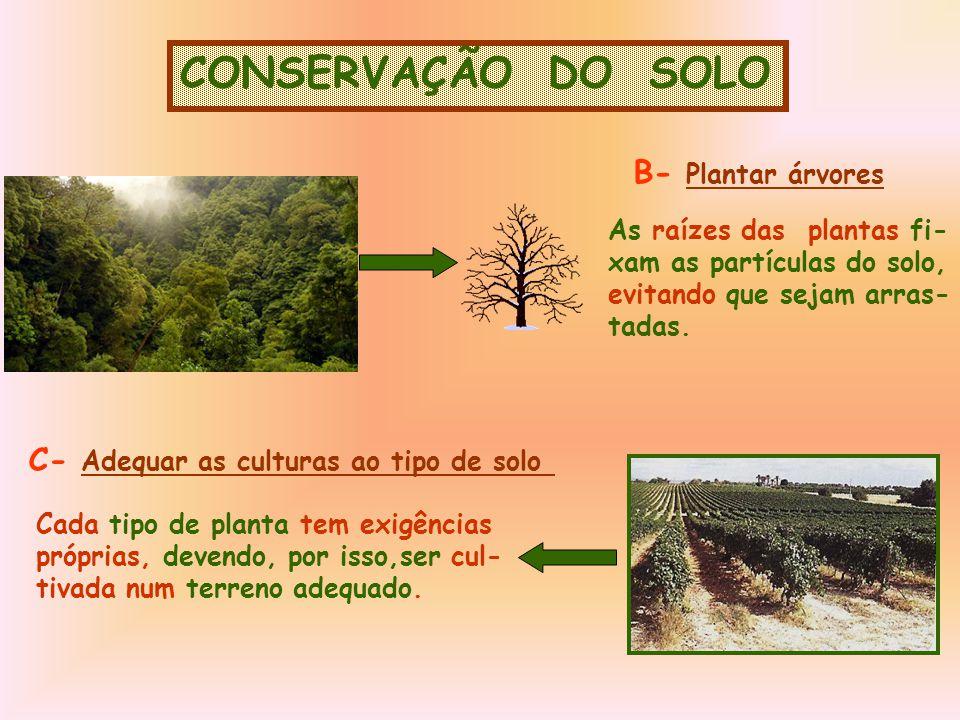 CONSERVAÇÃO DO SOLO B- Plantar árvores