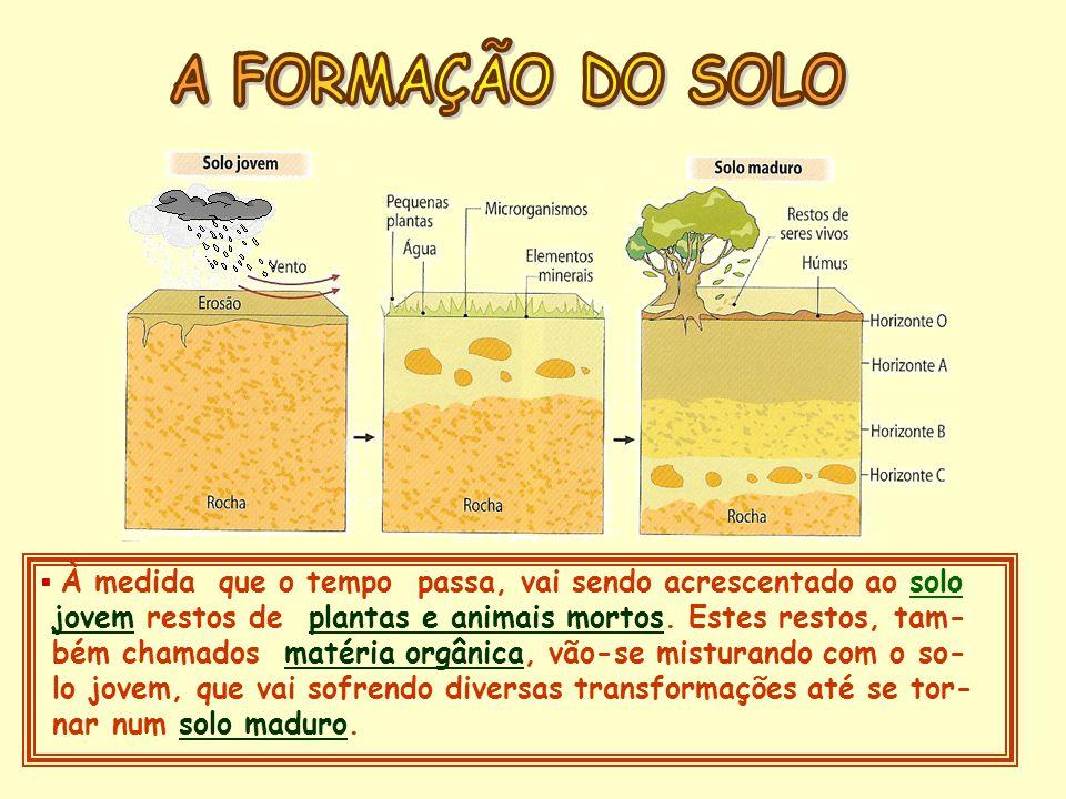 A FORMAÇÃO DO SOLO À medida que o tempo passa, vai sendo acrescentado ao solo. jovem restos de plantas e animais mortos. Estes restos, tam-
