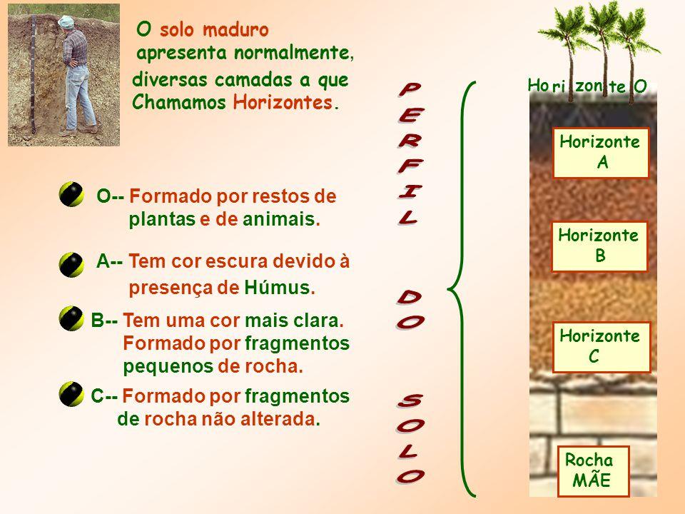 PERFIL DO SOLO O solo maduro apresenta normalmente,