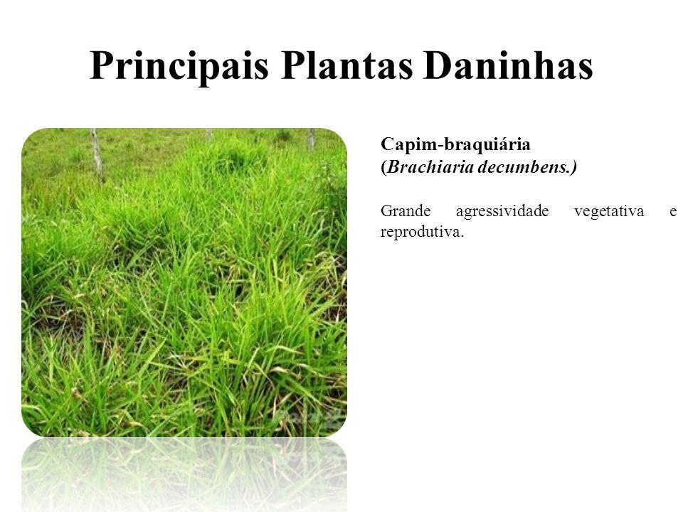 Principais Plantas Daninhas