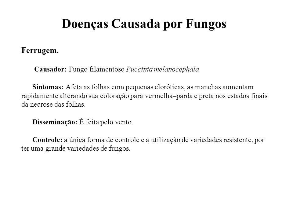 Doenças Causada por Fungos