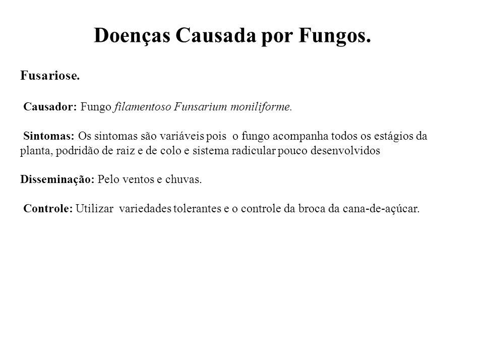 Doenças Causada por Fungos.