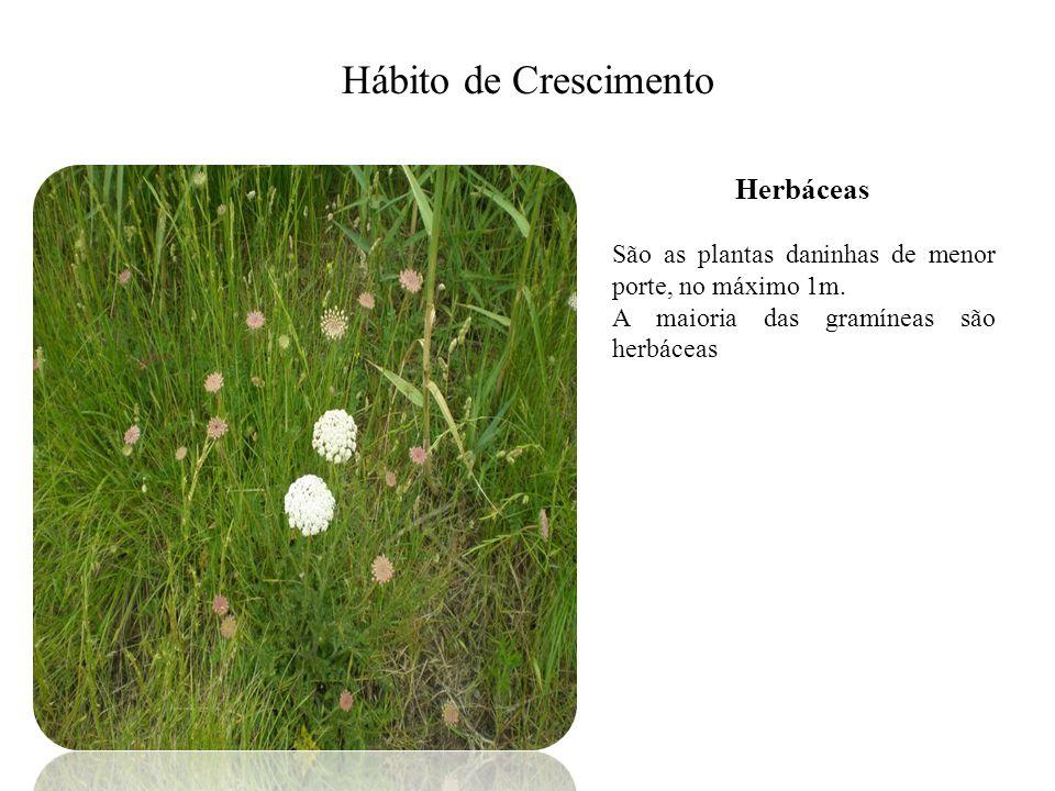 Hábito de Crescimento Herbáceas