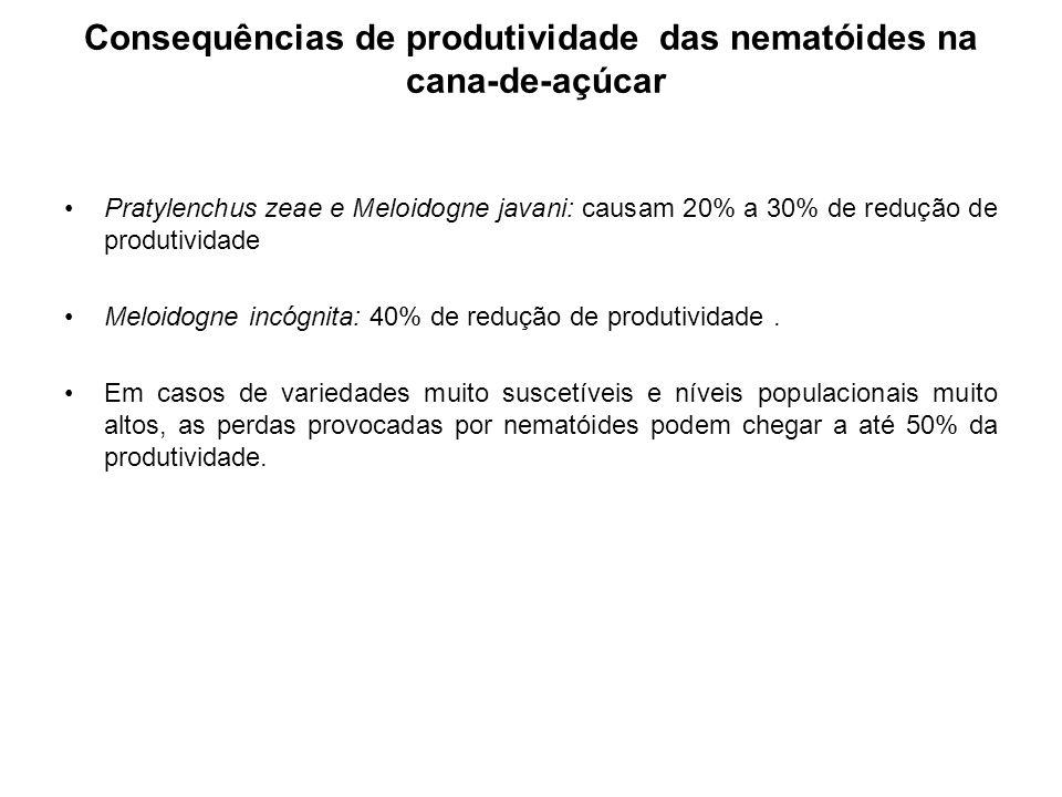 Consequências de produtividade das nematóides na cana-de-açúcar