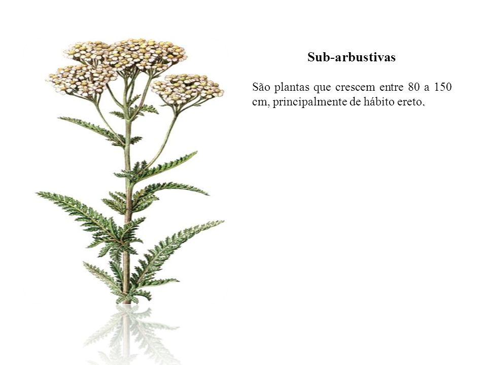Sub-arbustivas São plantas que crescem entre 80 a 150 cm, principalmente de hábito ereto.