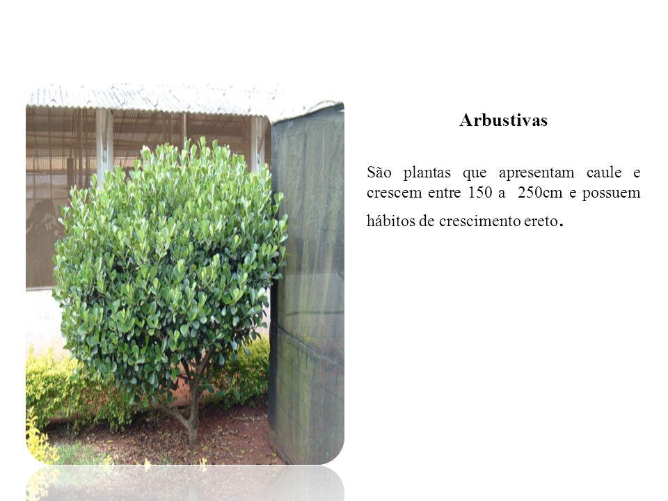 Arbustivas São plantas que apresentam caule e crescem entre 150 a 250cm e possuem hábitos de crescimento ereto.
