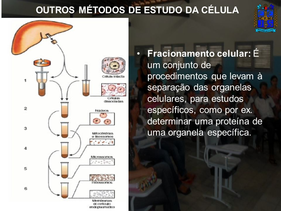 OUTROS MÉTODOS DE ESTUDO DA CÉLULA