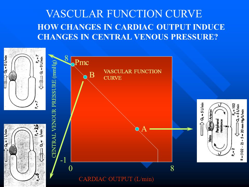 VASCULAR FUNCTION CURVE