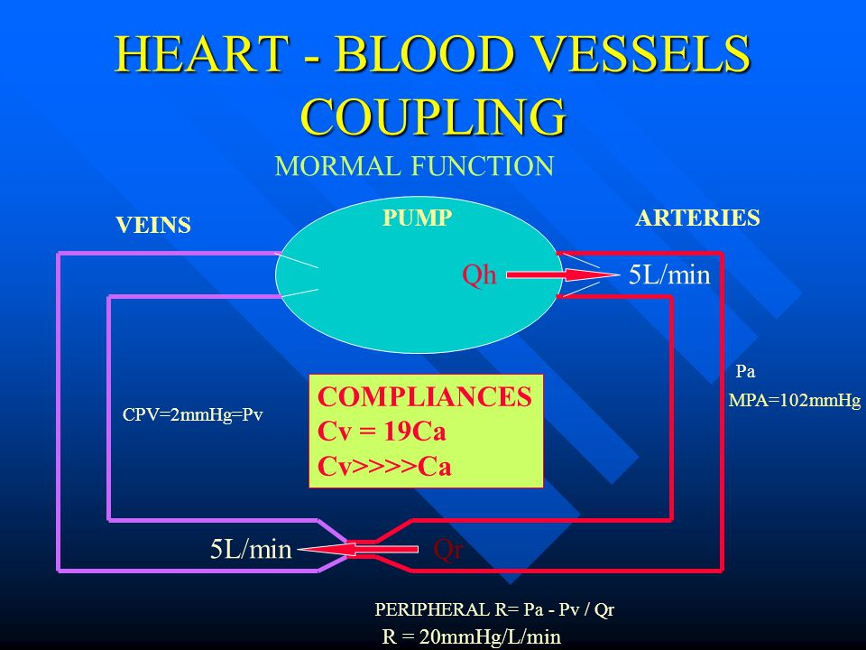 HEART - BLOOD VESSELS COUPLING