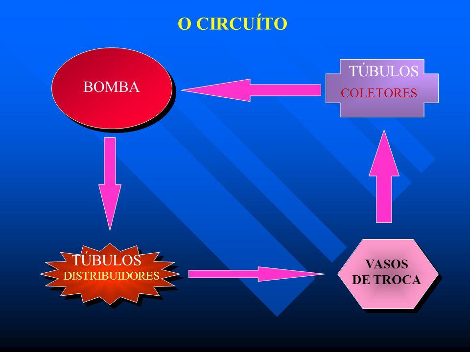 O CIRCUÍTO TÚBULOS BOMBA TÚBULOS COLETORES VASOS DE TROCA