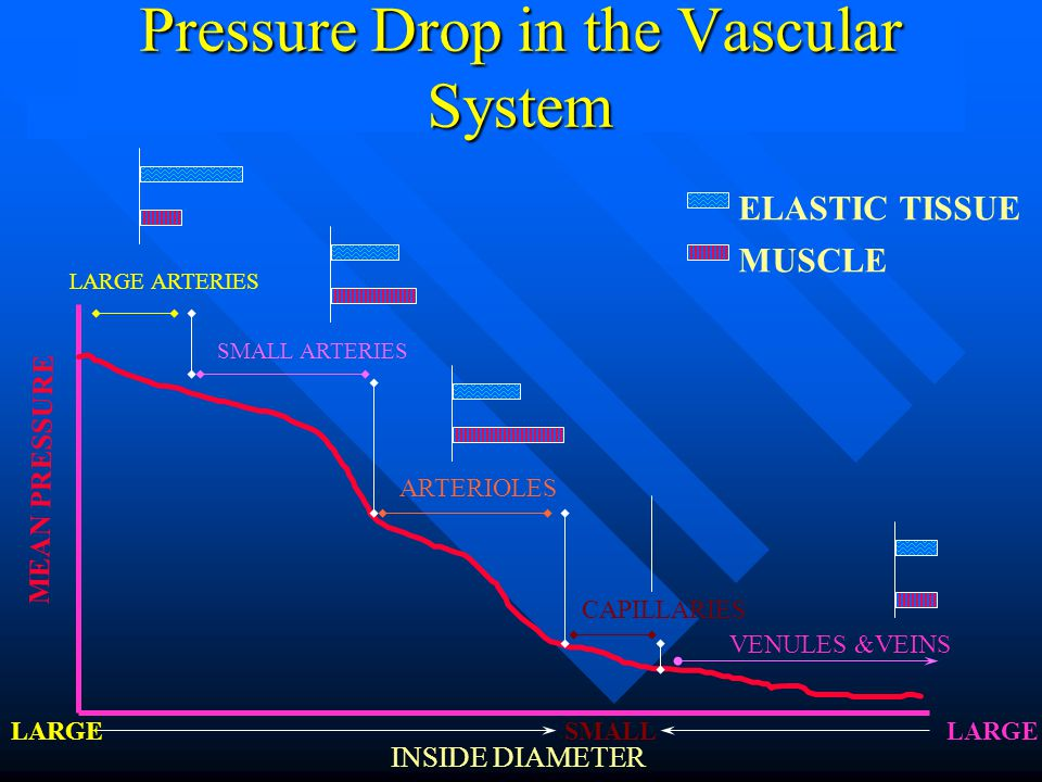 Pressure Drop in the Vascular System