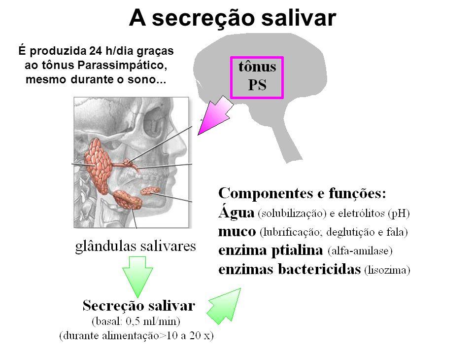 A secreção salivar É produzida 24 h/dia graças ao tônus Parassimpático, mesmo durante o sono...