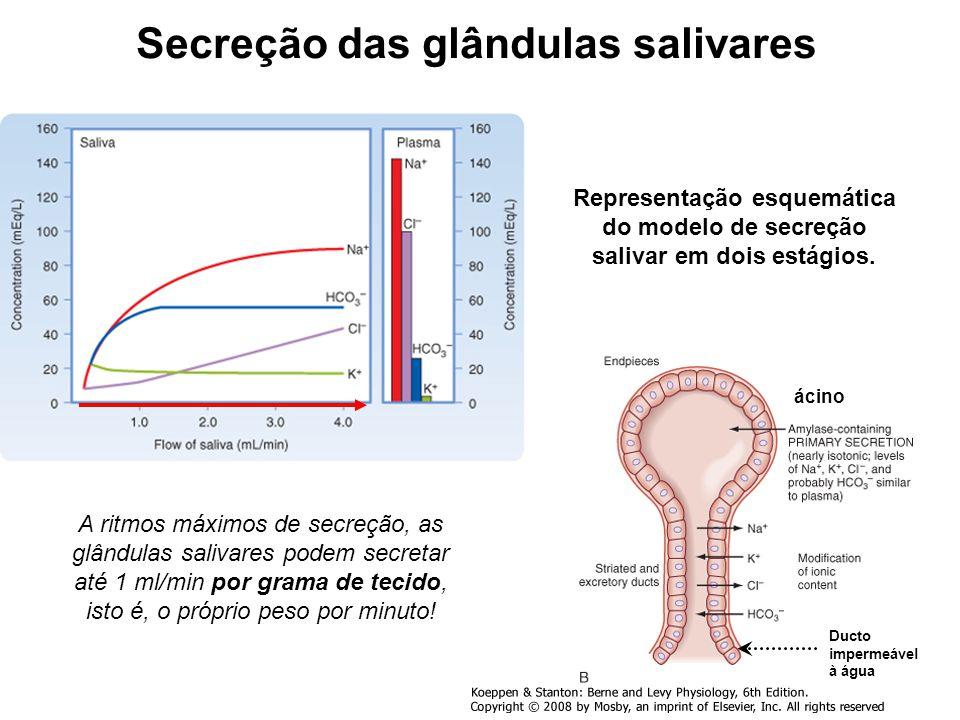 Secreção das glândulas salivares