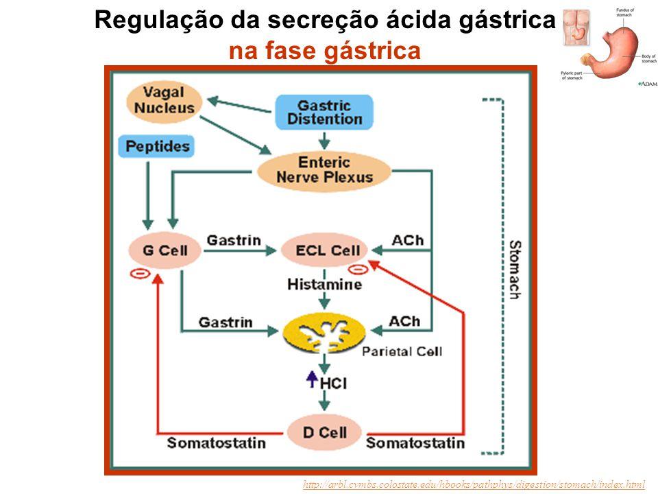 Regulação da secreção ácida gástrica