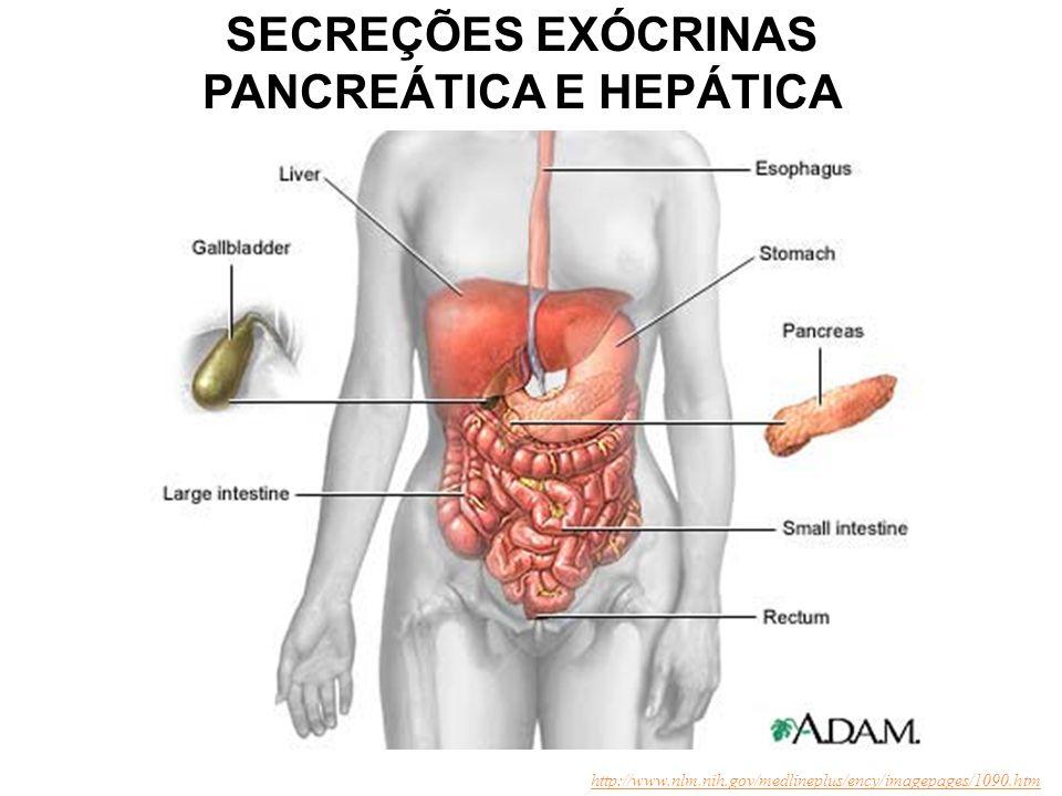 PANCREÁTICA E HEPÁTICA