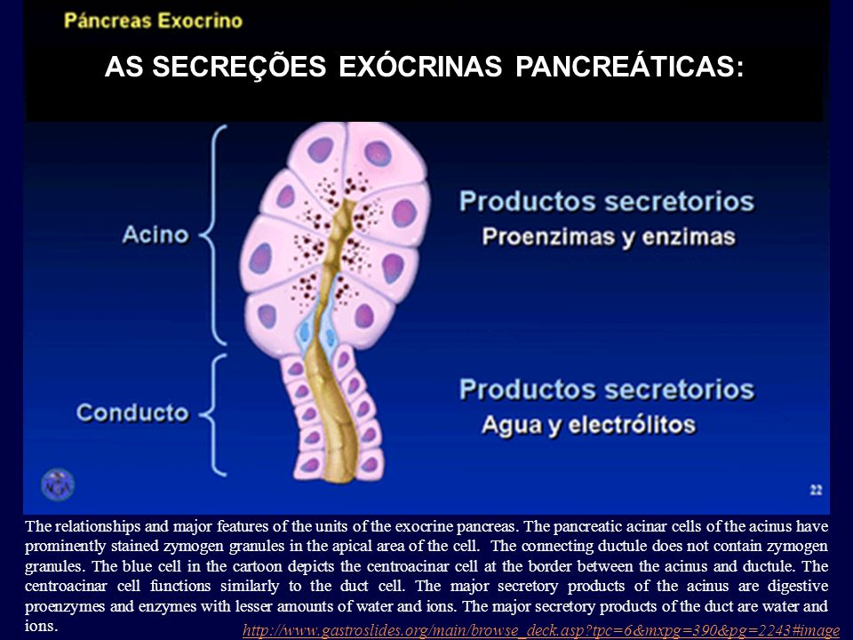 AS SECREÇÕES EXÓCRINAS PANCREÁTICAS: