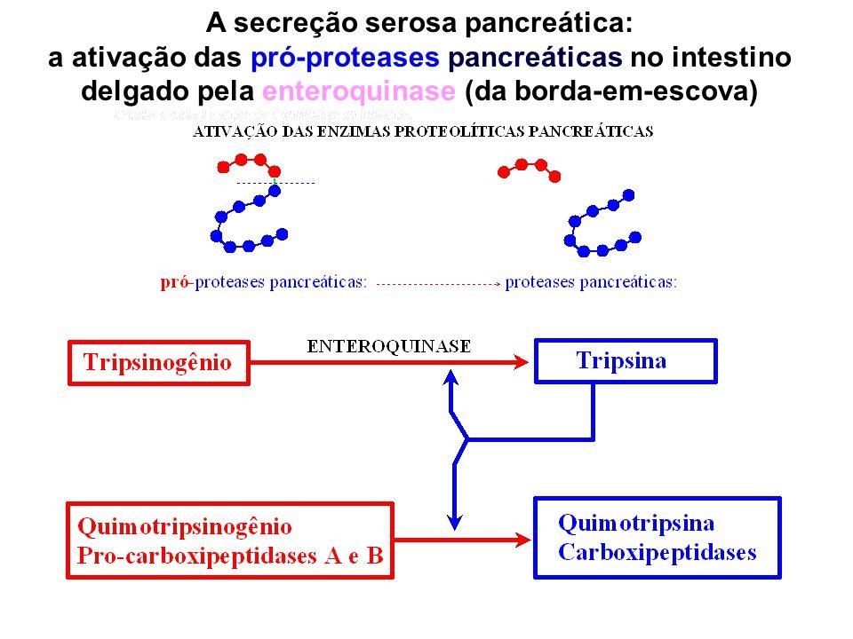A secreção serosa pancreática: