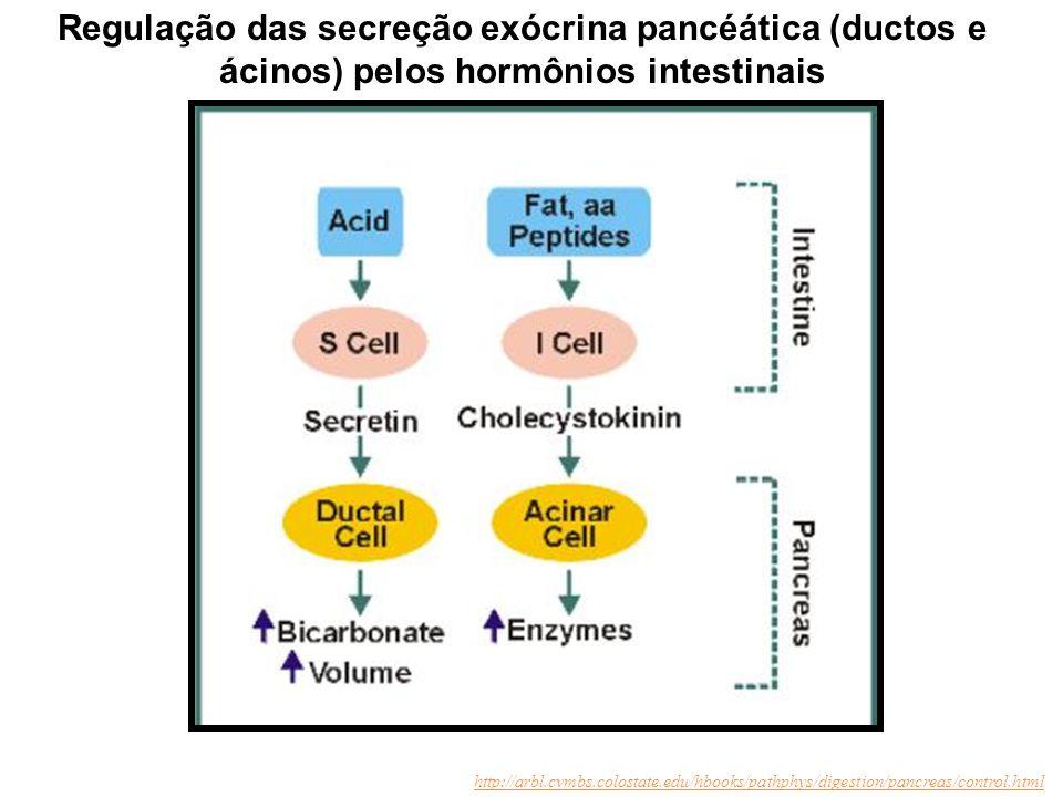 Regulação das secreção exócrina pancéática (ductos e ácinos) pelos hormônios intestinais