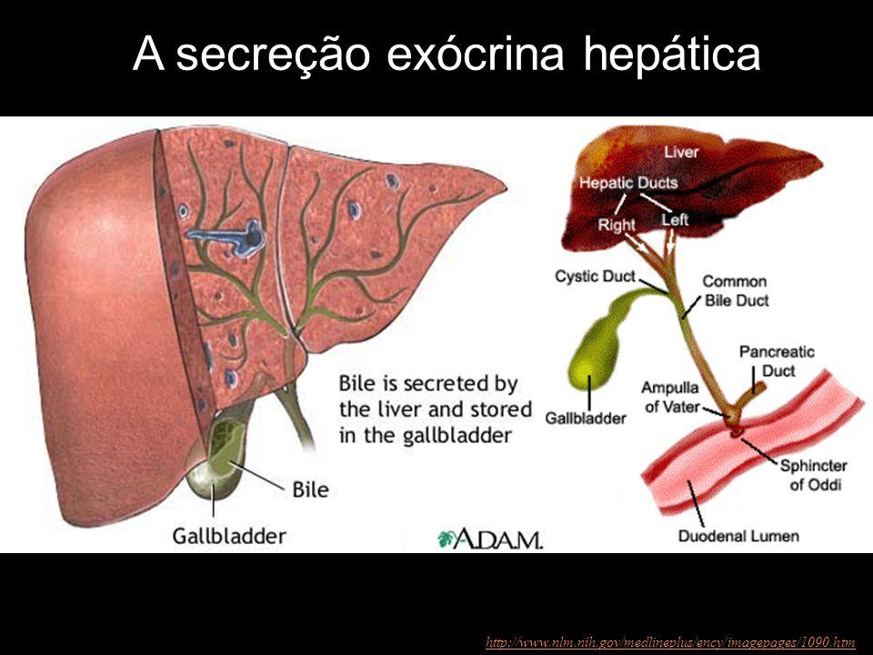 A secreção exócrina hepática