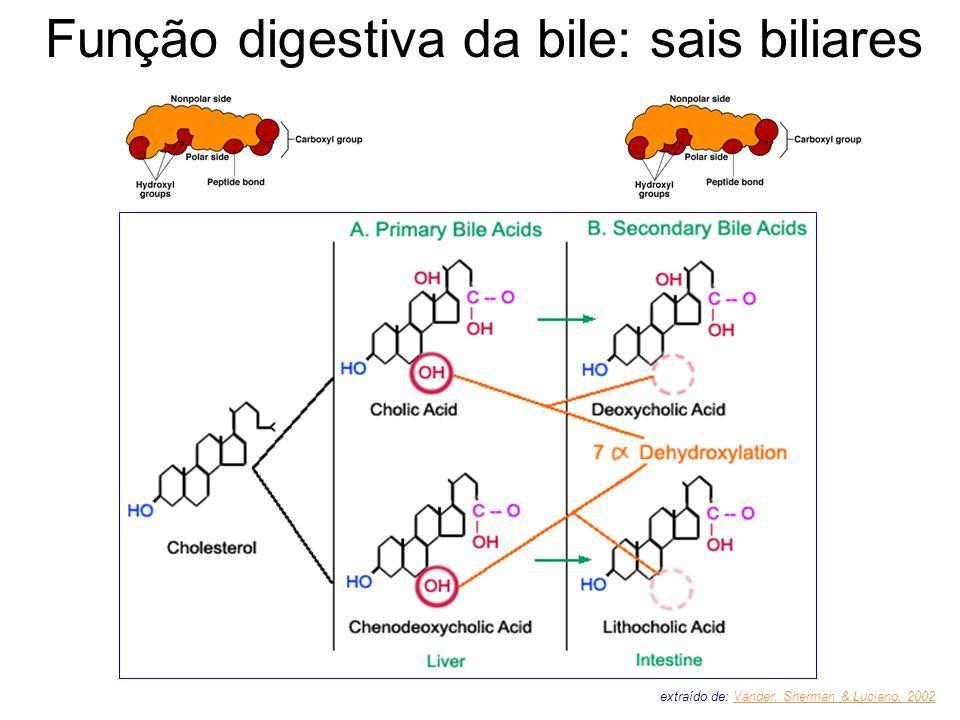 Função digestiva da bile: sais biliares