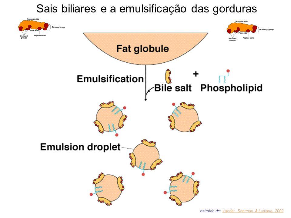 Sais biliares e a emulsificação das gorduras