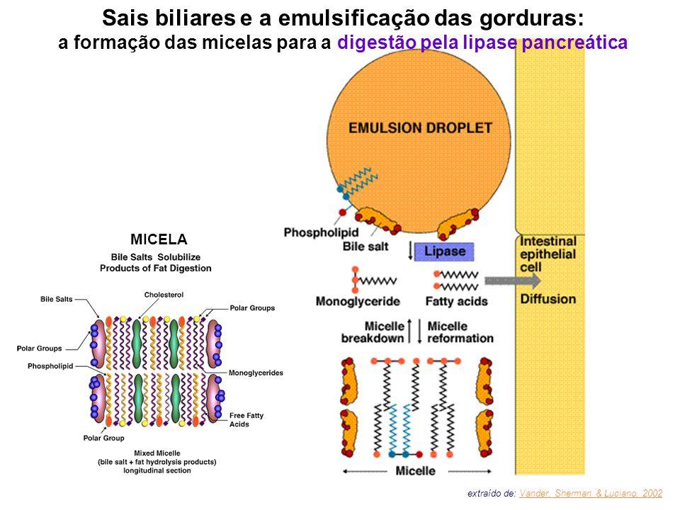 Sais biliares e a emulsificação das gorduras: