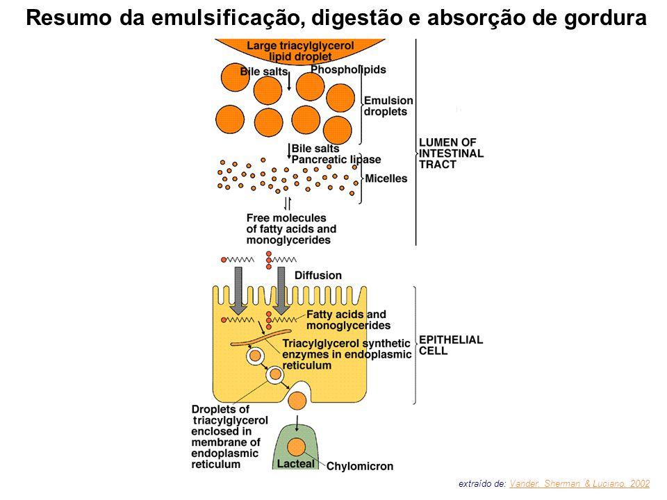 Resumo da emulsificação, digestão e absorção de gordura