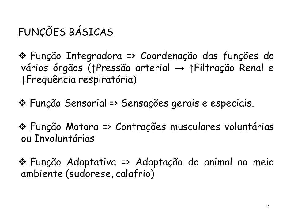 FUNÇÕES BÁSICAS Função Integradora => Coordenação das funções do vários órgãos (↑Pressão arterial → ↑Filtração Renal e ↓Frequência respiratória)