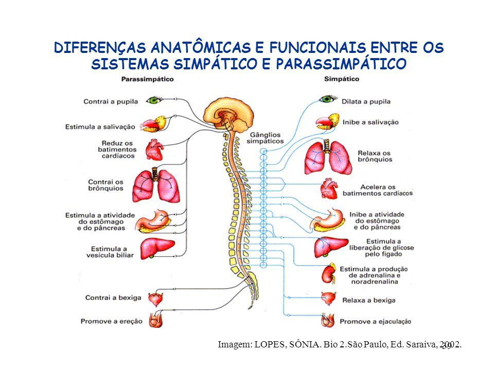 DIFERENÇAS ANATÔMICAS E FUNCIONAIS ENTRE OS SISTEMAS SIMPÁTICO E PARASSIMPÁTICO