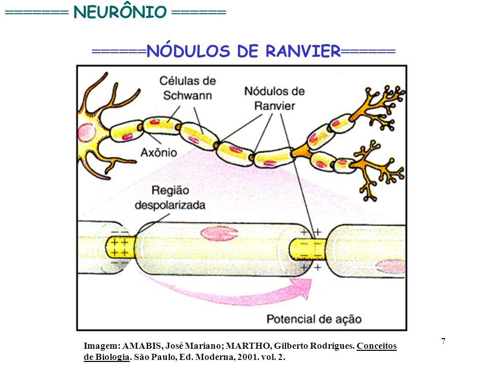 ======NÓDULOS DE RANVIER======