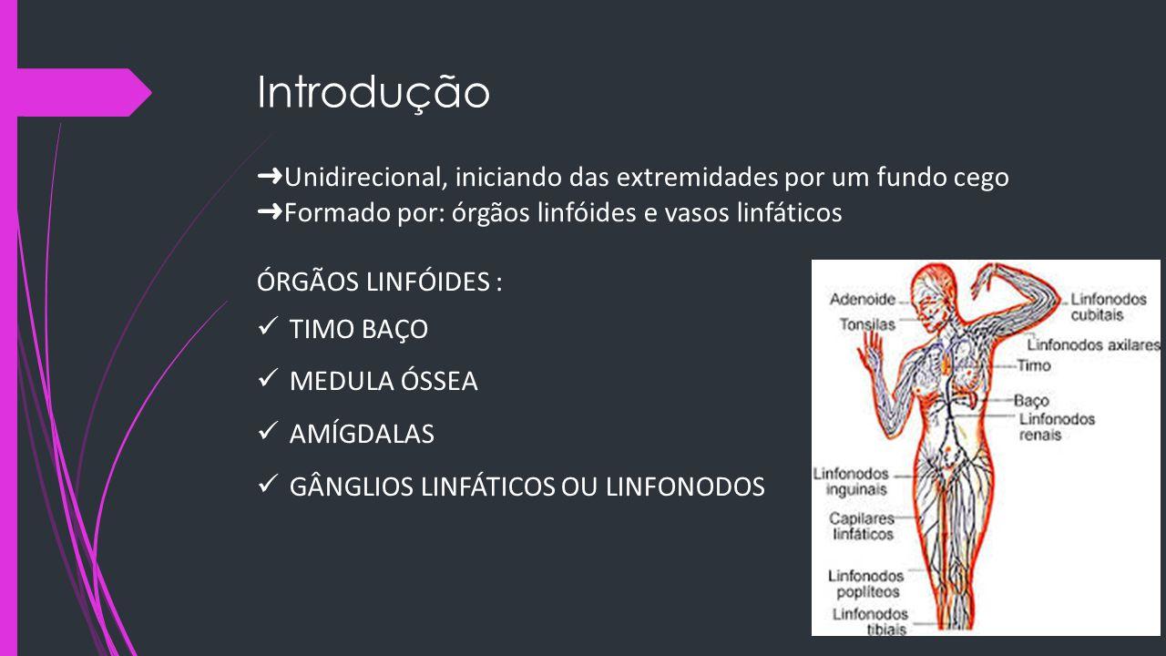 Introdução ➜Unidirecional, iniciando das extremidades por um fundo cego. ➜Formado por: órgãos linfóides e vasos linfáticos.