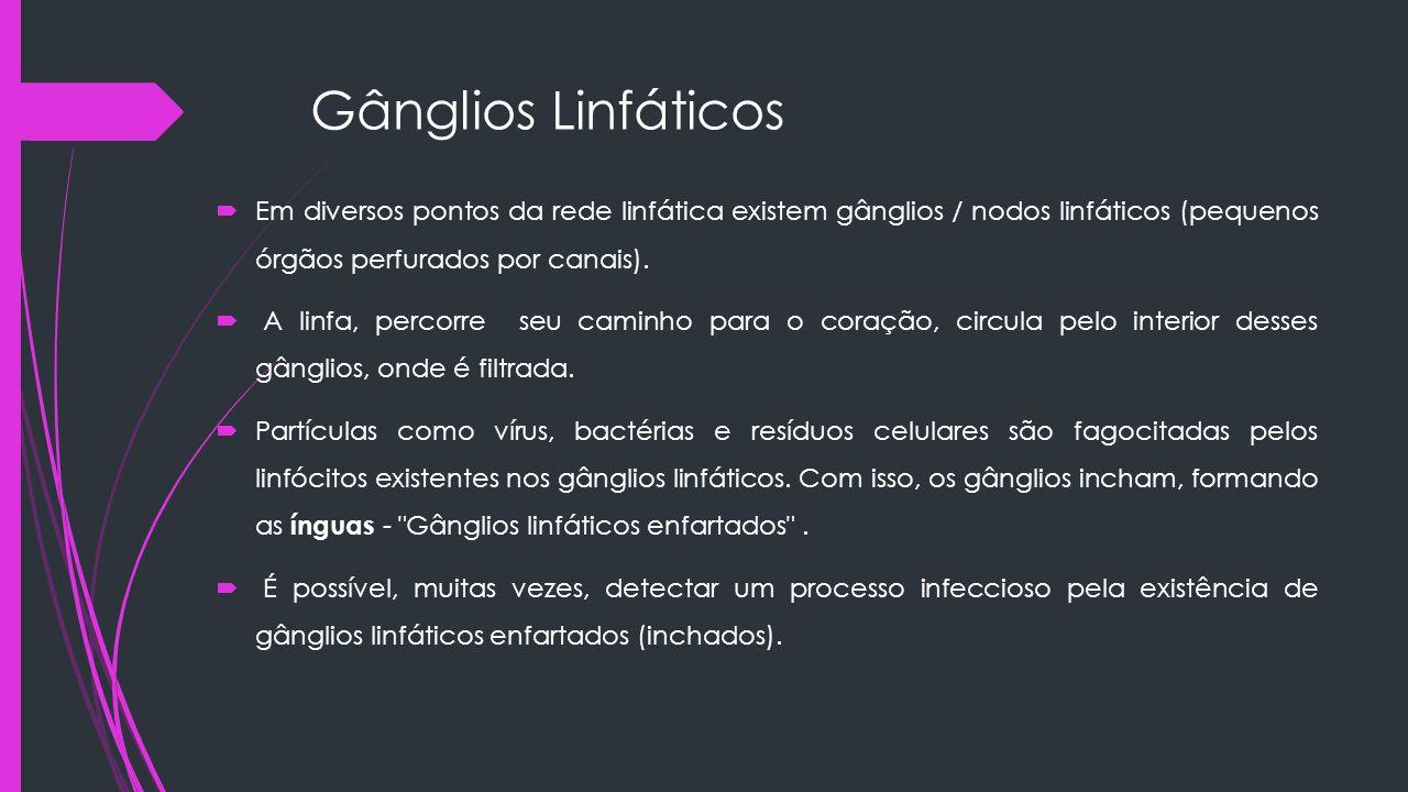 Gânglios Linfáticos Em diversos pontos da rede linfática existem gânglios / nodos linfáticos (pequenos órgãos perfurados por canais).