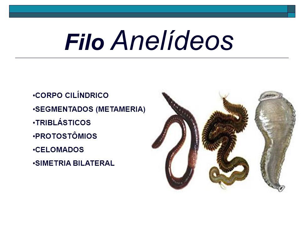 Filo Anelídeos CORPO CILÍNDRICO SEGMENTADOS (METAMERIA) TRIBLÁSTICOS