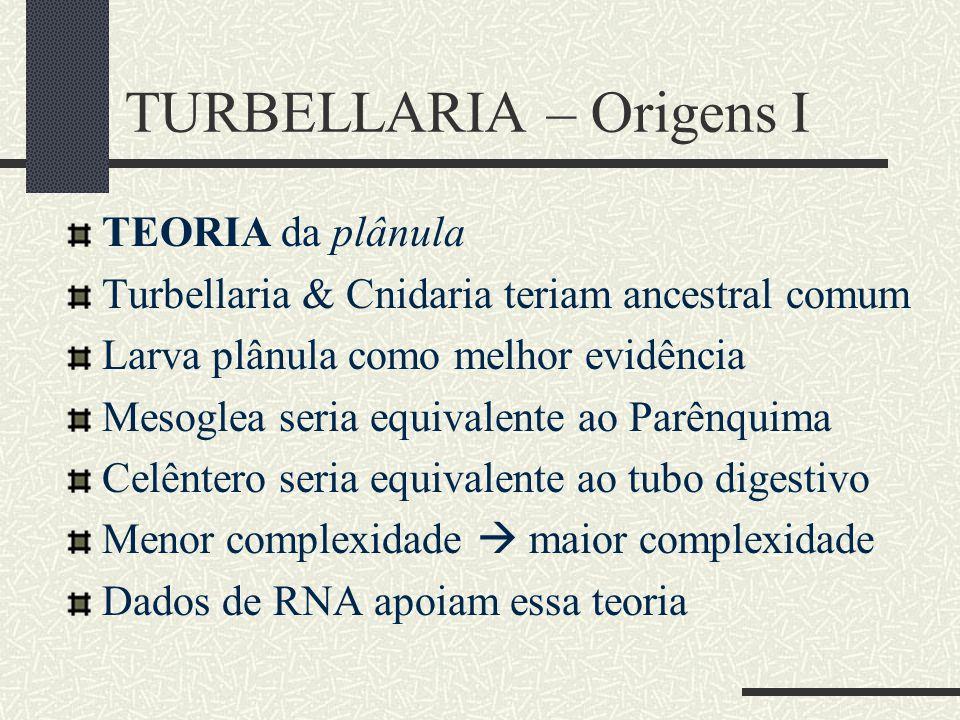 TURBELLARIA – Origens I