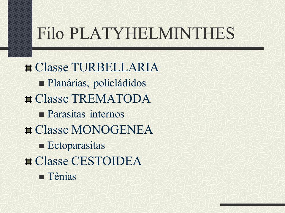 Filo PLATYHELMINTHES Classe TURBELLARIA Classe TREMATODA