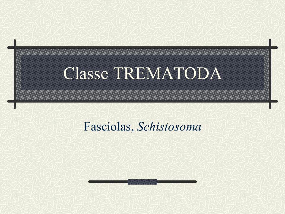Fascíolas, Schistosoma