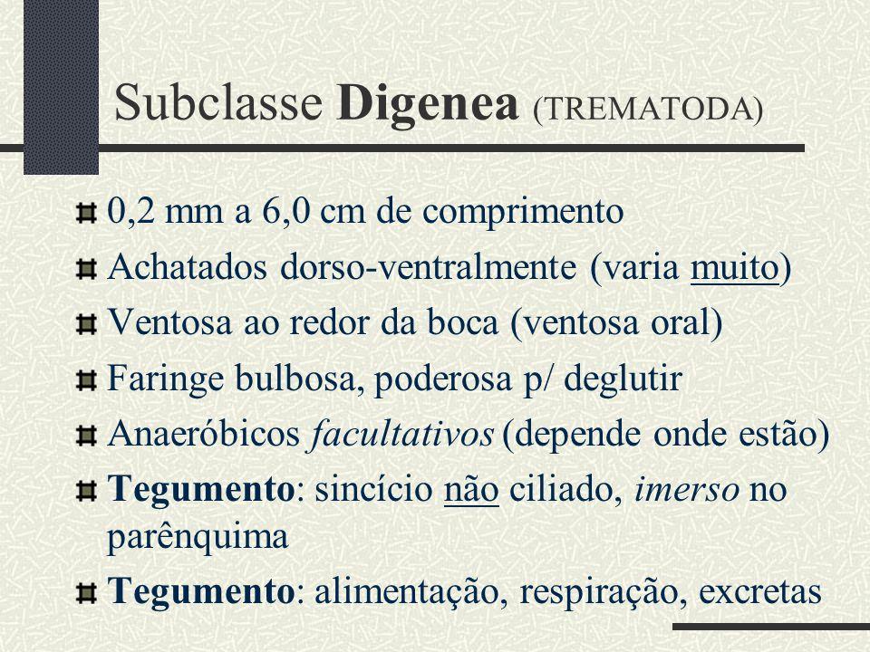 Subclasse Digenea (TREMATODA)