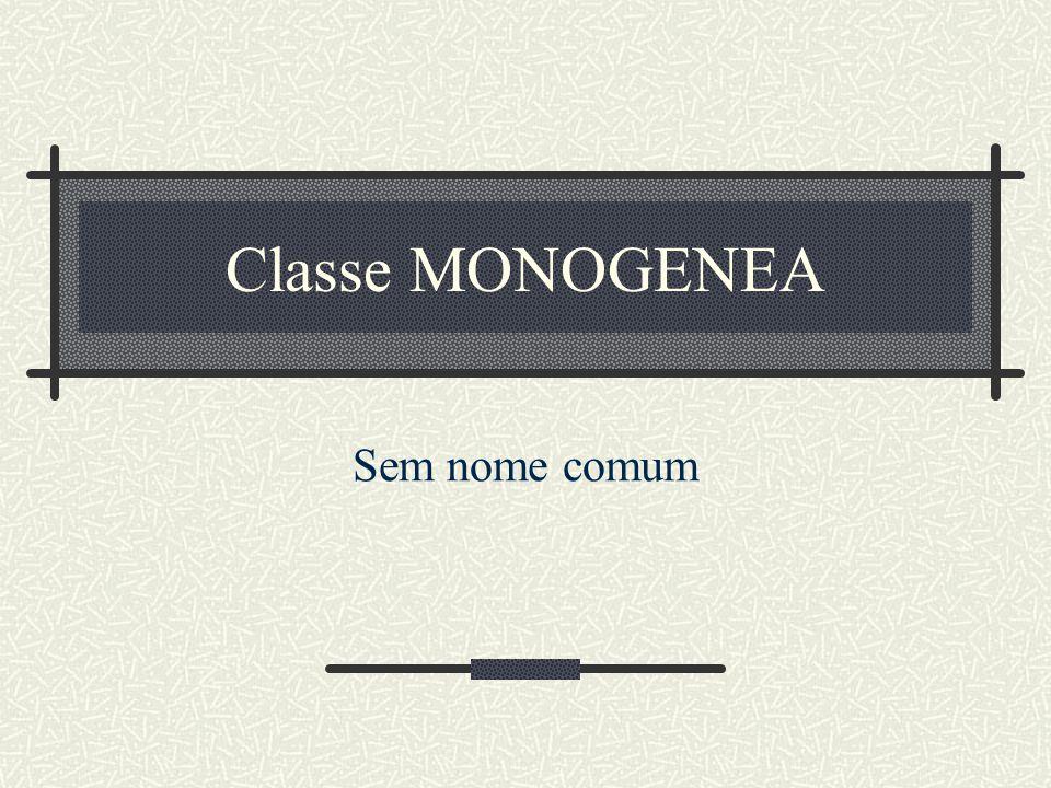 Classe MONOGENEA Sem nome comum