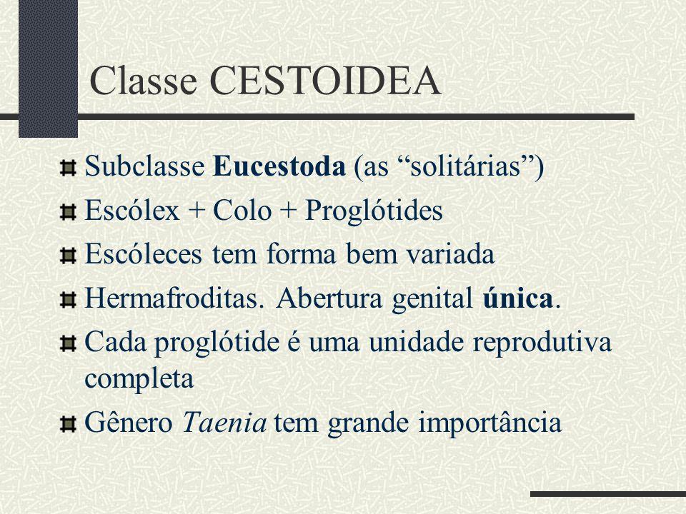 Classe CESTOIDEA Subclasse Eucestoda (as solitárias )